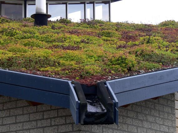 Une toiture végétalisée est un toit que l'on...