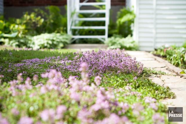 La pelouse de thym fait de petites fleurs... (PHOTO NINON PEDNAULT, ARCHIVES LA PRESSE)