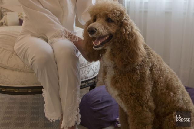 Les animaux domestiques peuvent transmettre des infections aux humains, surtout... (Archives La Presse)