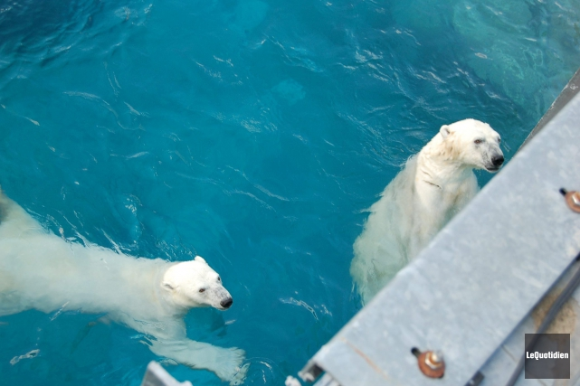 Zoo sauvage de Saint-Félicien.... ((Archives Le Quotidien))