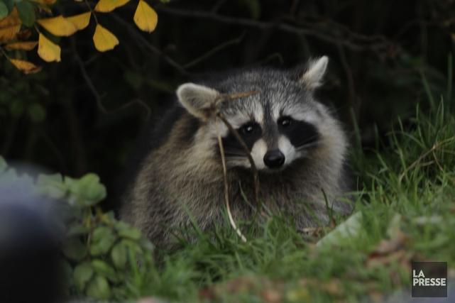 Le ministère des Forêts, de la Faune et des Parcs (MFFP) prend les grands... (Archives La Presse)