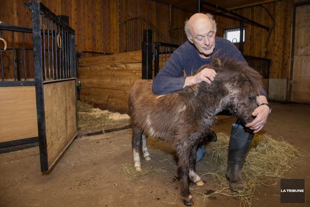 L'éleveur Heinz Santschi et son cheval blessé.... (Imacom, Jessica Garneau)