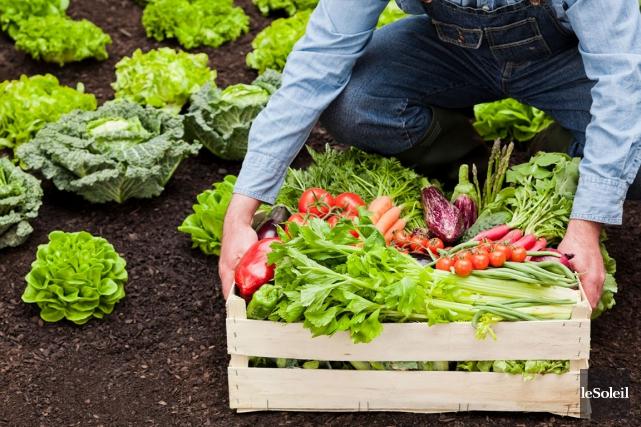 Les comparaisons entre l'agriculture biologique et l'agriculture traditionnelle... (Photothèque Le Soleil)