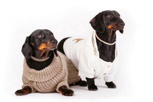 Le luxe canin n'a pas de limite. Déjà prisé par les Européens, voilà que le... (PHOTO TIRÉE DU SITE CHIEN MONDAIN)