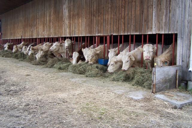 Pour Steve Beaudry et Jean-Félix Morin, l'agriculture est... (Photo fournie par Steve Beaudry)