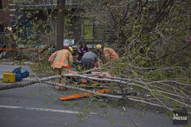 Deux jeunes Montréalais se sont retrouvés coincés sous un grand arbre qui... (PHOTO FÉLIX O.J. FOURNIER, COLLABORATION SPÉCIALE)