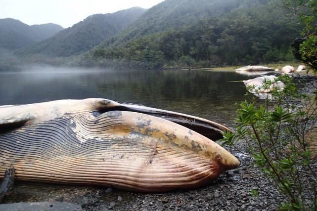 Les mammifères marins ont été trouvés par un... (Photo AP)