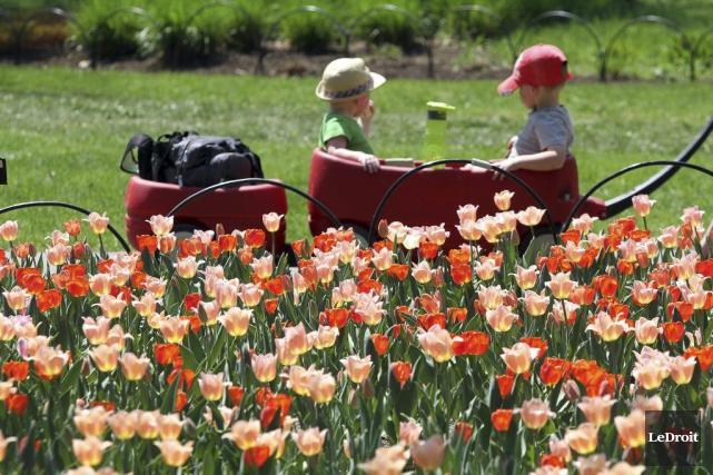 Le Festival canadien des tulipes, qui s'étirera jusqu'au... (Etienne Ranger, LeDroit)