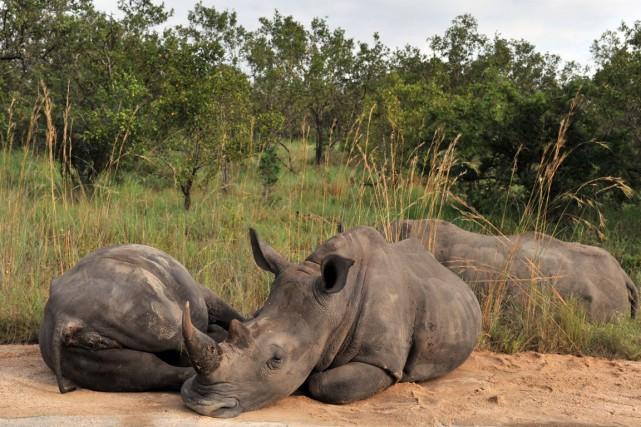 Les autorités sud-africaines ont mis à l'abri des... (PHOTO ISSOUF SANOGO, ARCHIVES AFP)