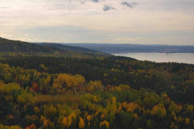 La forêt privée du Saguenay-Lac-Saint-Jean est la grande... ((Archives))