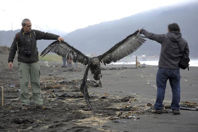 Les oiseaux ont été retrouvés morts dimanche sur... (Photo: Reuters)