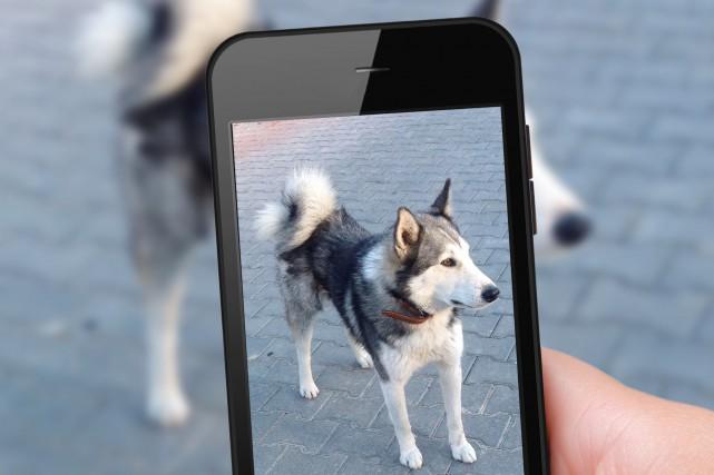 Les utilisateurs de Yük pourront signaler la disparition... (Photo Shutterstock, Rasulov)