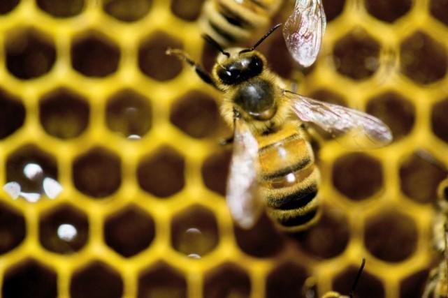 Un homme a été arrêté pour le vol de plus de 180 ruches et de quelque cinq... (Photo Andy Duback, archives Associated Press)