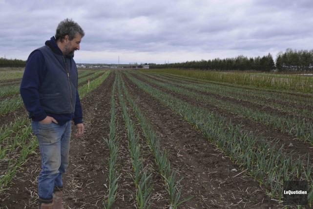 Déjà, Jardins Saint-Félicien cultivent de l'ail pour la... (Photo Le Quotidien Louis Potvin)