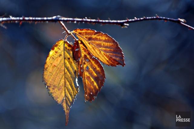La météo n'a pas fini de nous réserver des surprises. Du temps froid frappe la... (Archives La Presse)