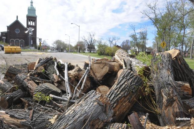 Les arbres ont été débités par les employés... (Photo Le Quotidien, Michel Tremblay)