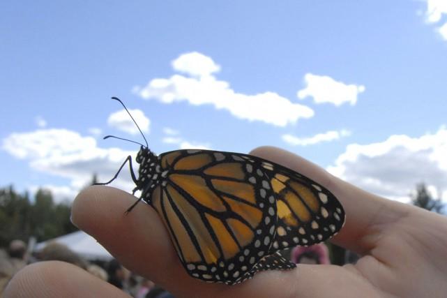 Le papillon monarque pourrait-il être reconnu comme «trésor... (photo archives La Voix de l'Est)