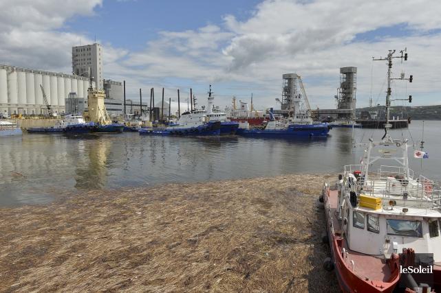 L'agrandissement du Port de Québec incluait initialement l'ajout... (Photothèque Le Soleil, Pascal Ratthé)