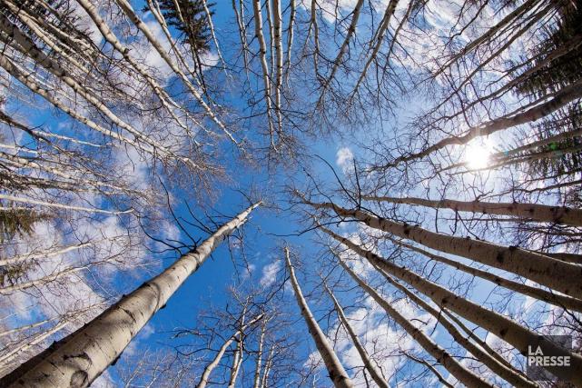 L'industrie de la forêt estime que des milliers... (Archives, La Presse)