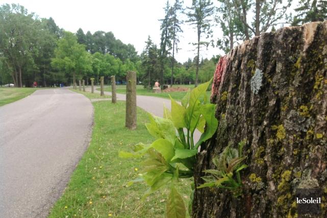 Depuis 2012, l'agrile du frêne a tué des... (PHOTOTHÈQUE LE SOLEIL, JEAN-FRANÇOIS CLICHE)