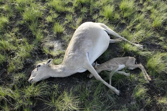 Le fait qu'aucun animal n'ait survécu dans les... (Photo fournie par le ministère de l'Agriculture du Kazakhstan)