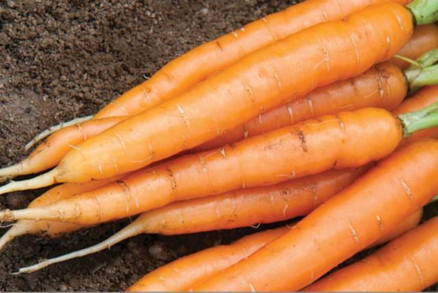 La carotte (ici le cultivar primé «Adelaide») est... (Photo fournie par National Garden Bureau)
