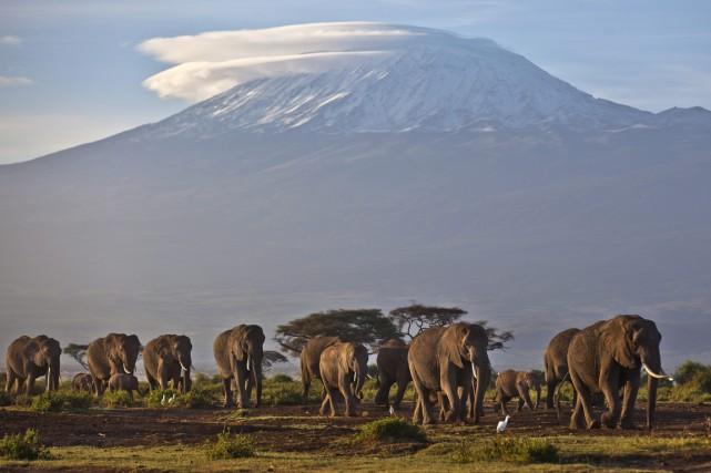 Selon des chiffres du gouvernement tanzanien, rendus publics... (PHOTO BEN CURTIS, ARCHIVES AP)