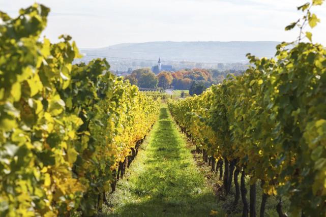 Avec les vignobles les plus septentrionaux d'Europe, l'Allemagne... (Photo Digital/Thinkstock)