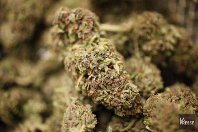 De petits plants de cannabis sont inscrits au... (Archives, Associated Press)