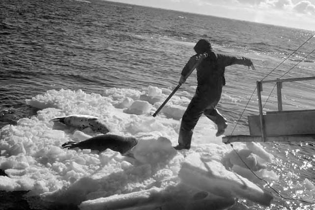 L'Association des chasseurs de phoques des Îles-de-la-Madeleine est... (COLLABORATION SPÉCIALE YOANIS MENGE)
