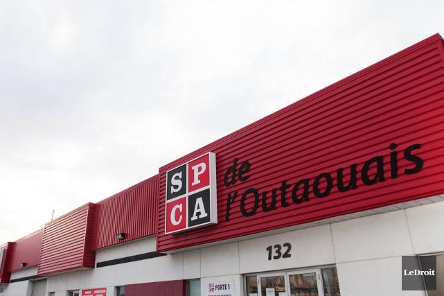 La Société de prévention de la cruauté envers les animaux (SPCA) de l'Outaouais... (Archives LeDroit)