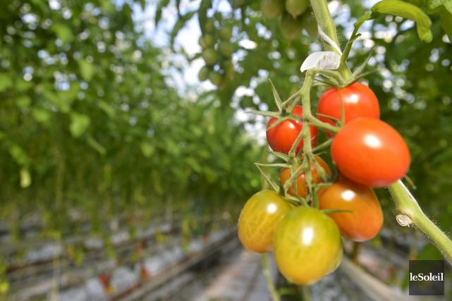 La saga du ketchup aux tomates canadiennes a... (Photothèque Le Soleil, Yan Doublet)