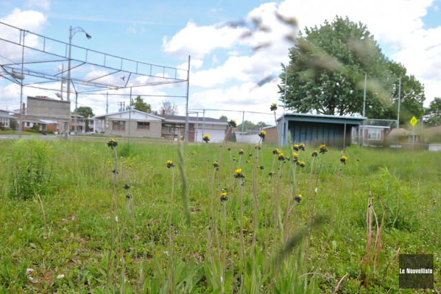 Chaque été, l'ancien terrain de balle situé au... (Photo: Émilie O'Connor, Le Nouvelliste)