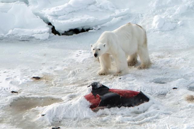 Lors de recherches dans l'archipel norvégien du Svalbard... (PHOTO  JON AARS, AFP)