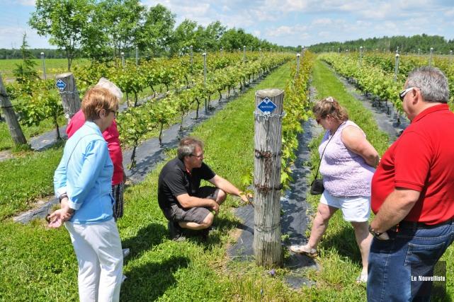 Six vignobles du Centre-du-Québec ont ouvert leur porte... (Photo: Émilie O'Connor, Le Nouvelliste)