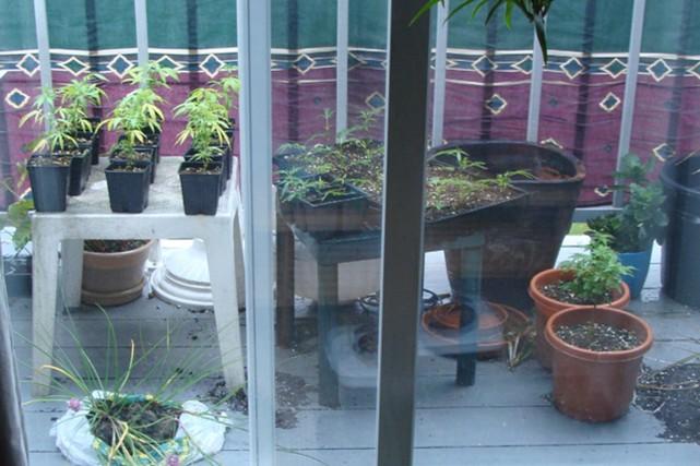 Des plants de cannabis poussaient sur le balcon... (Photo fournie par la RPM)