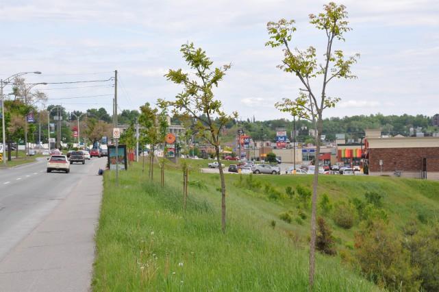 La Ville de Sherbrooke continue de verdir le paysage en plantant des centaines... (Photo fournie par la Ville de Sherbrooke)