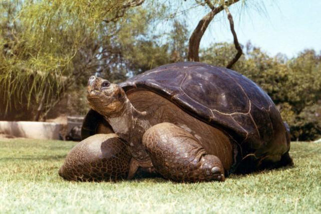 Dans ses jeunes années, Speed était reconnu pour... (Photo San Diego Zoo, AP)