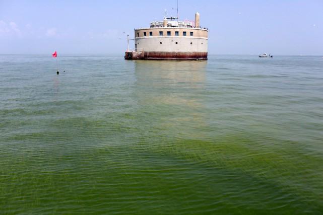 Des algues sont présentes dans le lac Érié,... (PHOTO HARAZ N. GHANBARI, ARCHIVES AP)