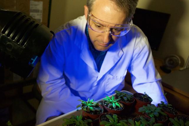 Le professeur PeterMoffettdans son laboratoire, devant plusieurs plantes... (Photo fournie par Michel Caron)