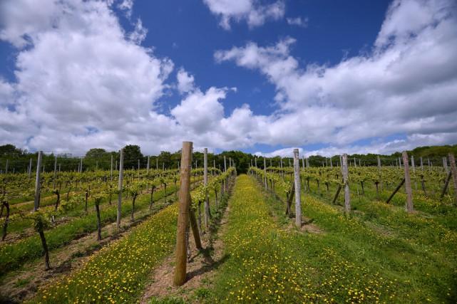 Le domaine de Bluebell situé à Uckfield, dans... (PHOTO GLYN KIRK, AFP)