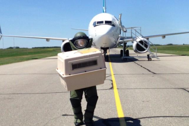La Gendarmerie royale du Canada (GRC) au Manitoba tente toujours de déterminer... (PHOTO PC)