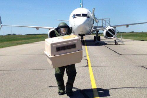 Lundi soir, six passagers ont été blessés après... (Photo La Presse canadienne)