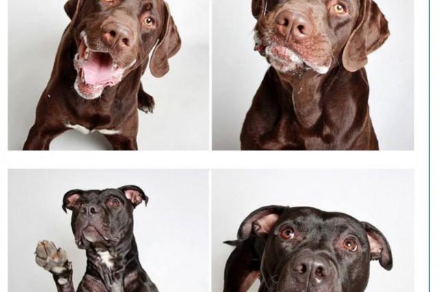Des chiens qui séjournaient dans un refuge ont... ((Courtoisie))