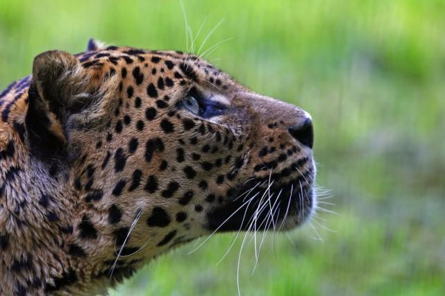 Un guide touristique du parc Kruger, en Afrique du Sud (nord-est), a survécu... (Photo Yves Herman, archives Reuters)