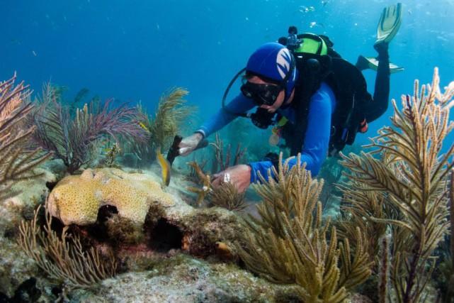L'océan absorbe plus de 90% de l'énergie excédentaire... (Photo DAVID GROSS, AFP)