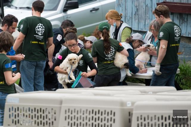 Plus de 200 chiots et 12 chats ont... (Jessica Garneau, La Tribune)
