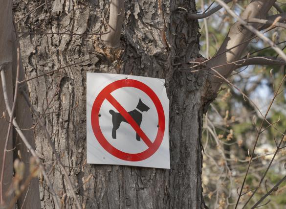 «Nous n'empruntons plus certains sentiers tant les chiens... (PHOTO THINKSTOCK)