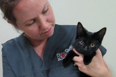 Ce petit chaton a été abandonné sur une... (Courtoisie, SPA d'Ottawa)