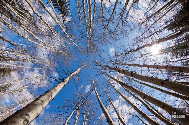 S'il faut en croire les industriels forestiers de la Côte-Nord, la rencontre du... (Archives, La Presse)